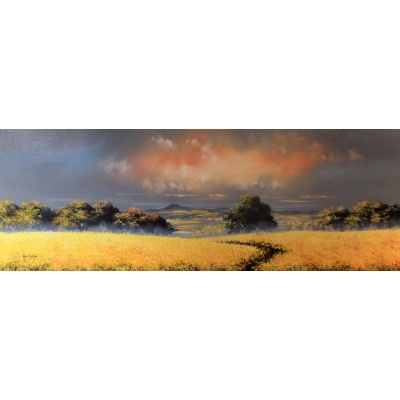 Oldmeldrum Fields of Gold by Allan Morgan